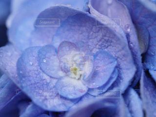 花,水滴,フローラ