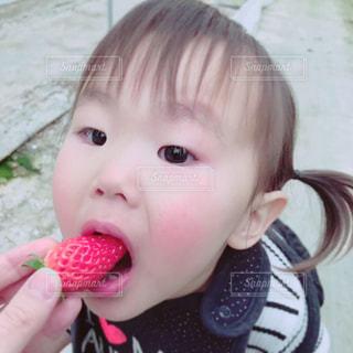 子ども,食べ物,春,季節,子供,女の子,いちご,フルーツ,いちご狩り,旬,フレッシュ
