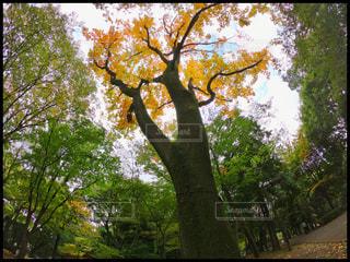 近くの木のアップの写真・画像素材[843584]