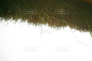 近くの木のアップの写真・画像素材[818354]