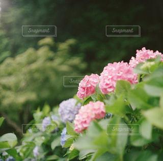 近くの花のアップの写真・画像素材[1230907]