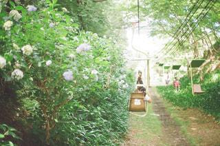 紫陽花,film,フィルム,梅雨,リフト,フィルム写真,フイルムカメラ