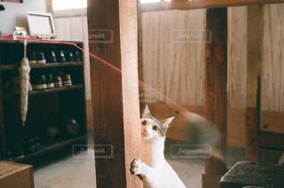 木製のドアの上に座っている猫の写真・画像素材[1271288]