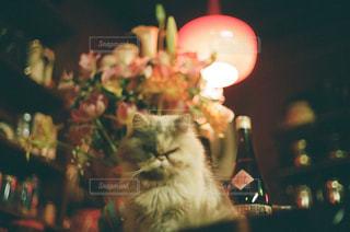 テーブルの上に座って猫の写真・画像素材[1271293]