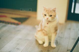 テーブルの上に座って猫の写真・画像素材[1271300]