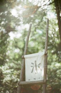 夏の木々と氷の看板の写真・画像素材[2814103]