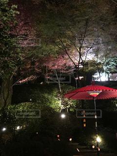 ★紅葉した日本庭園★の写真・画像素材[890193]