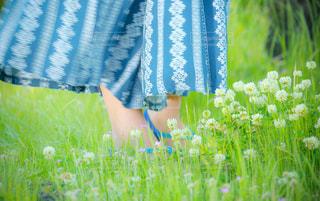 近くにいくつかの花のアップの写真・画像素材[907477]
