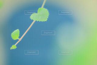 緑,葉っぱ,ハート,癒し,雨上がり,リーフ