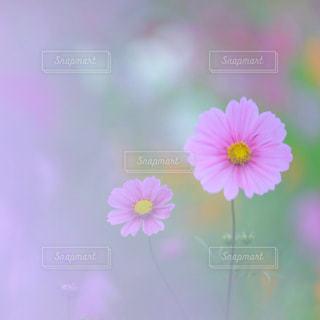 近くの花のアップの写真・画像素材[1455455]