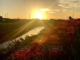 空,花,秋,夕日,赤,綺麗,夕焼け,彼岸花,曼珠沙華,秋空