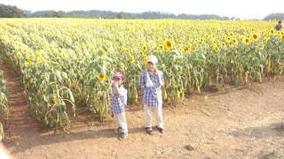 ひまわり畑に立つ兄弟の写真・画像素材[819723]