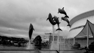 ジャンプしてるイルカたちの写真・画像素材[821312]