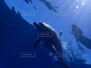 水の中を泳ぐ鳥の写真・画像素材[937597]
