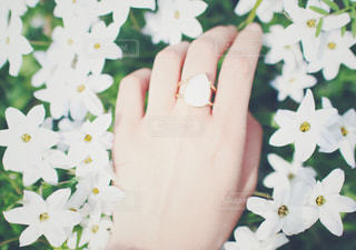 Flowers / Handの写真・画像素材[896841]