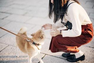 女性,犬,公園,動物,散歩,いぬ,柴犬,わんちゃん