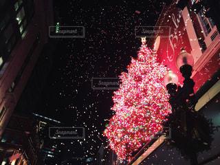 冬,クリスマス,クリスマスツリー,ボストン