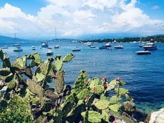 南フランスの海と船とサボテンの写真・画像素材[3612371]