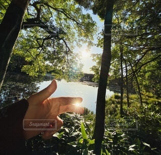 自然,絶景,屋外,湖,太陽,森,植物,水,手,北海道,反射,トレッキング,観光,指,手持ち,樹木,人物,人,旅行,ポートレート,知床,ライフスタイル,手元,鏡面