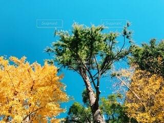 紅葉と空の写真・画像素材[3713689]