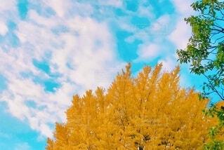 紅葉と雲と空の写真・画像素材[3713691]