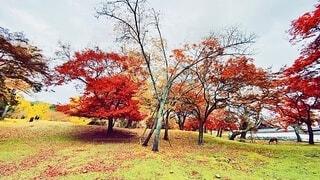 奈良の紅葉の写真・画像素材[3720059]