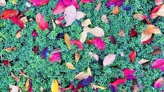 カラフルな落葉の写真・画像素材[3720070]