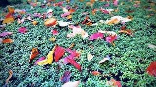 カラフルな落葉の写真・画像素材[3720086]