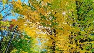 木々の色が変わり始めた森の散策の写真・画像素材[3721125]