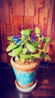 植物とメガネの写真・画像素材[3768262]