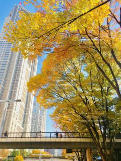 空,公園,光,タワー,樹木,都会,高層ビル