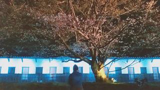 20代,桜,花見,夜桜,女子,お花見,ライトアップ,福岡