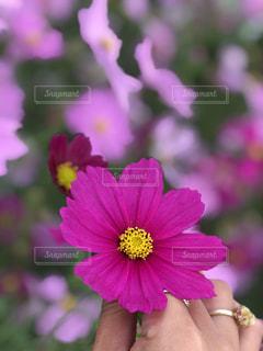 近くの花のアップの写真・画像素材[814544]