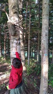 木の隣に立っている男の写真・画像素材[814869]