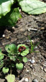 近くの植物のアップの写真・画像素材[814919]