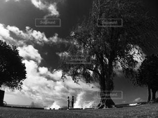 木の黒と白の写真の写真・画像素材[818937]
