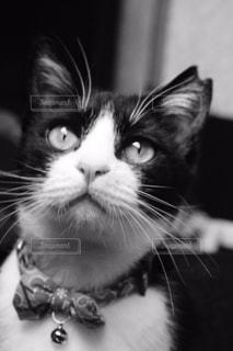 窓を見ている猫の写真・画像素材[815231]
