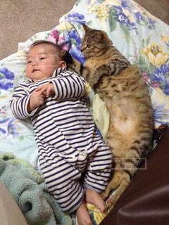 ムスコ4ヶ月、ムスメ1歳4ヶ月。の写真・画像素材[817129]