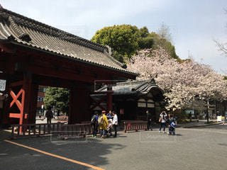 東京大学 赤門と桜の写真・画像素材[1122512]
