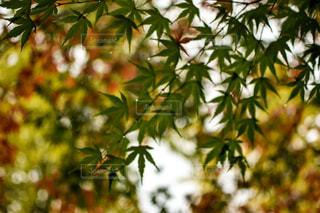 秋色。の写真・画像素材[883423]
