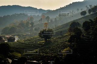 お茶畑。の写真・画像素材[1181208]