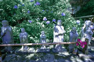 緑,植物,観光地,景色,光,紫陽花,新緑,日本,梅雨,寺,地蔵