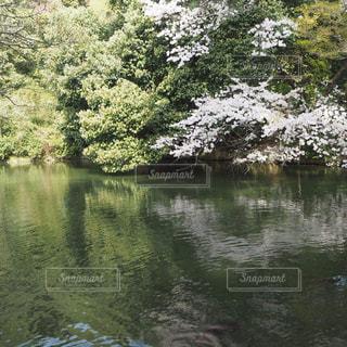 桜,うどん,水辺,お花,観光,旅行,香川,栗林公園,2018年4月