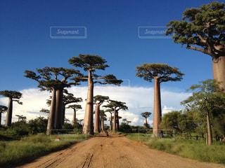 未舗装の道路側にヤシの木のグループの写真・画像素材[817069]