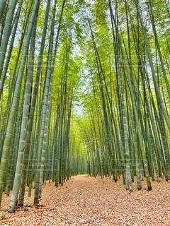 竹林の背景の写真・画像素材[4651891]