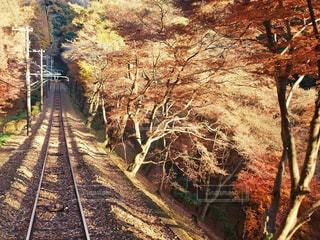 木の隣にトラック ダウンを走行する列車の写真・画像素材[844281]