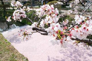 テーブルの上の花の花瓶の写真・画像素材[1145386]