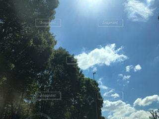 緑と青い空の写真・画像素材[2423076]