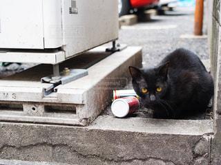建物の上に座って黒い猫の写真・画像素材[1279490]