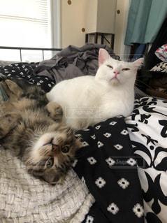 ベッドの上で横になっている猫の写真・画像素材[1628522]